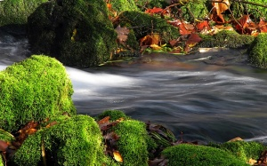 a_stream_with_flowing_water_through_an_area_of_mossy_rocks_in_autumn.1920x1200.8e040b7c